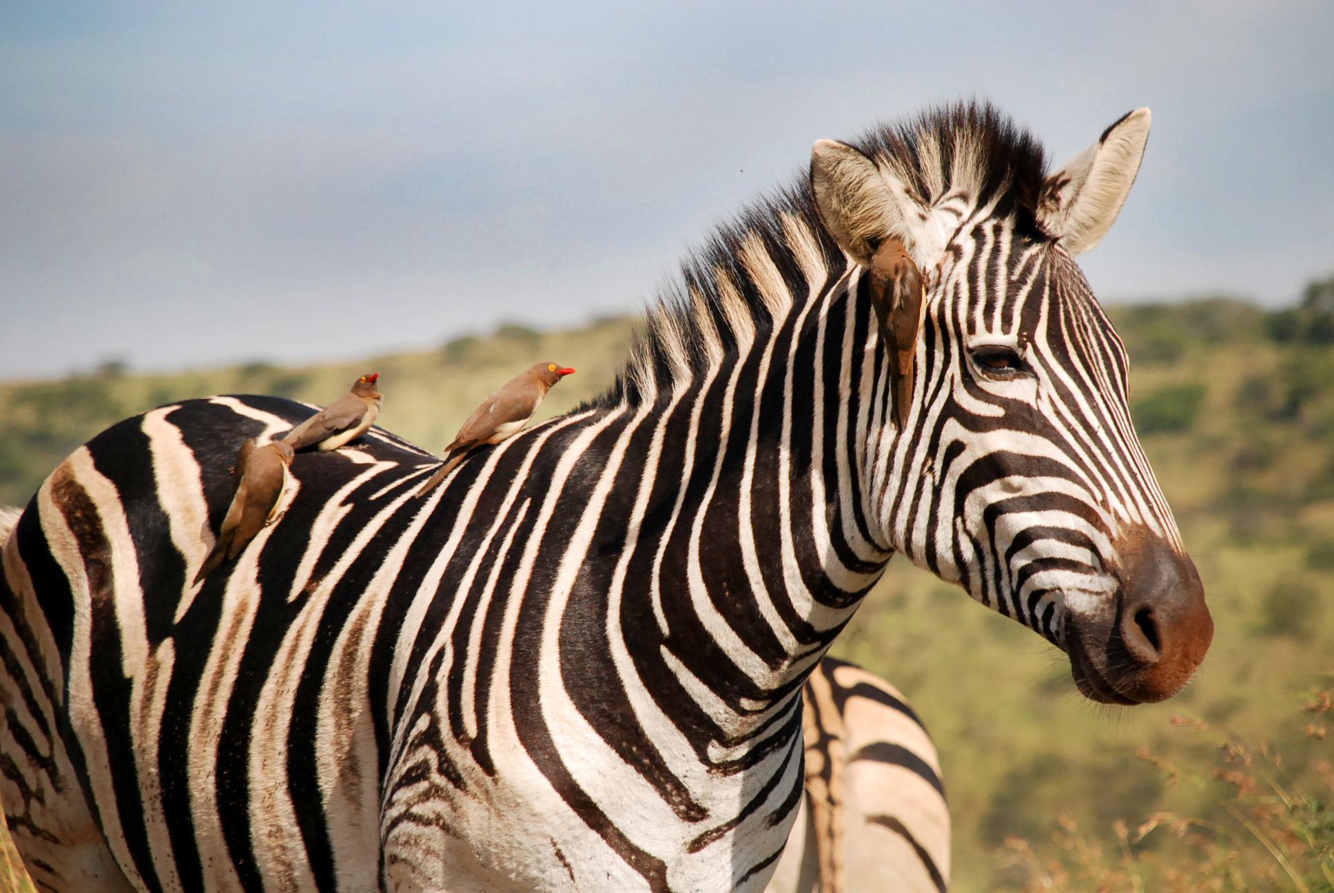 South Africa 15.jpg