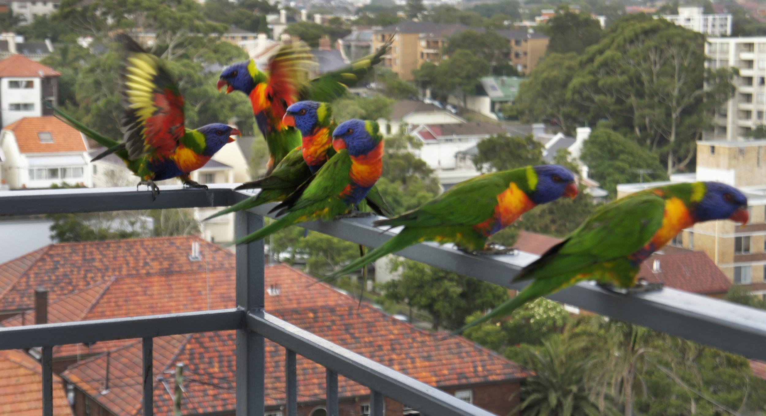 Australia 22.jpg