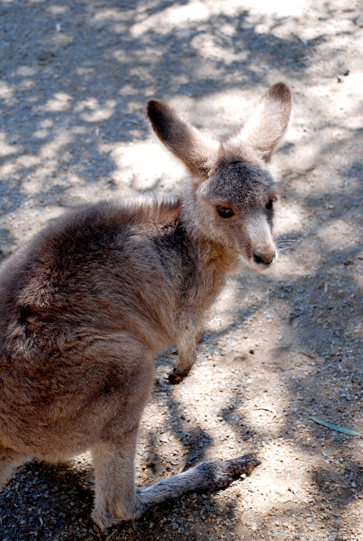 Australia 37.jpg