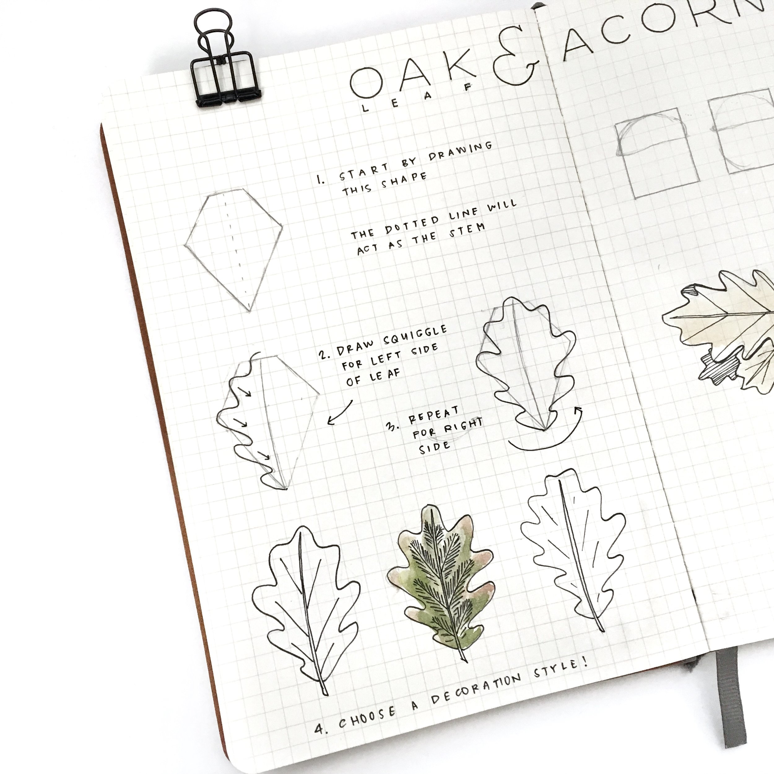 inkbyjeng-drawwithjeng-oak-leaves-and-acorn-02-left.jpg