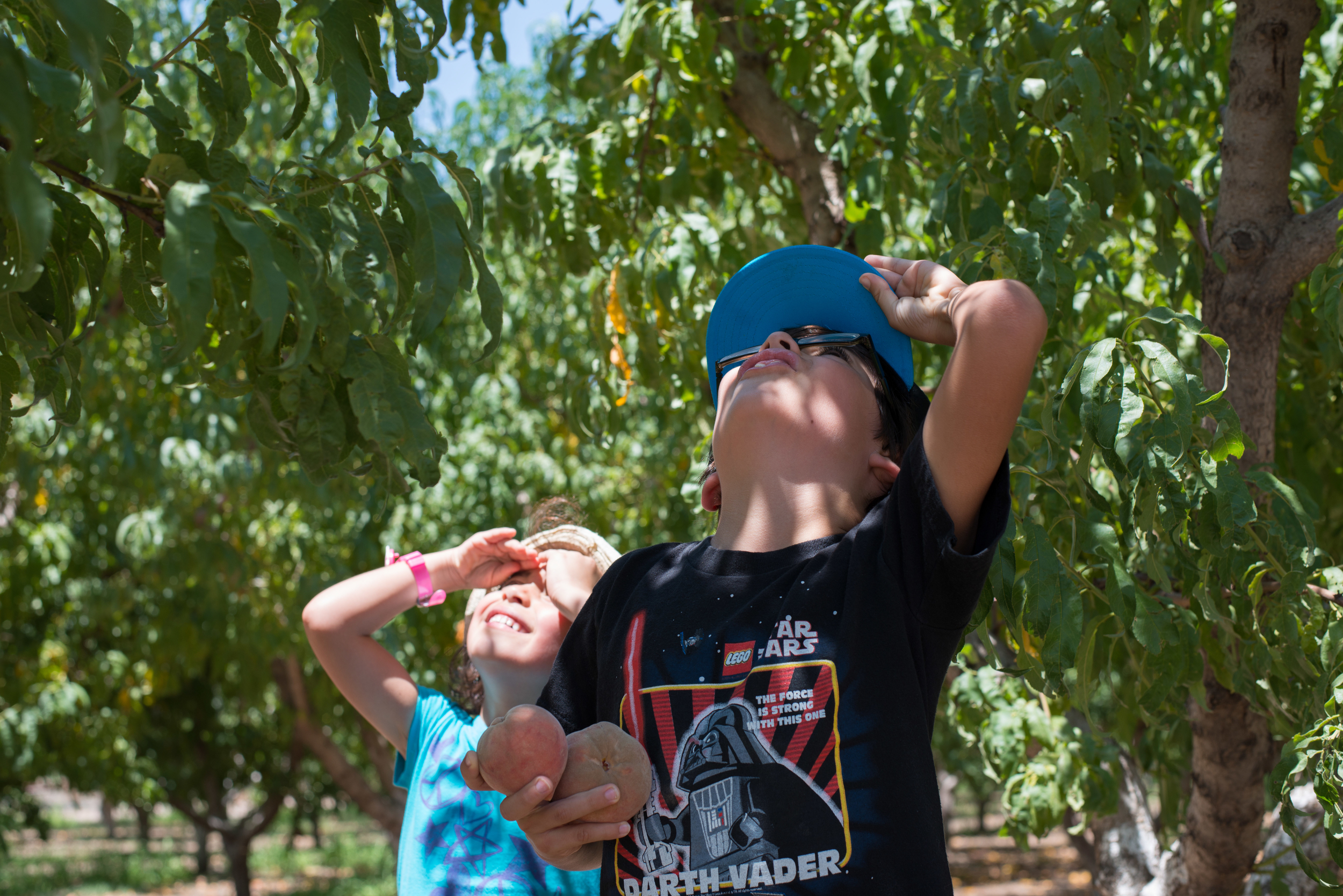 Peach Picking at Apple Annie's in Wilcox, AZ