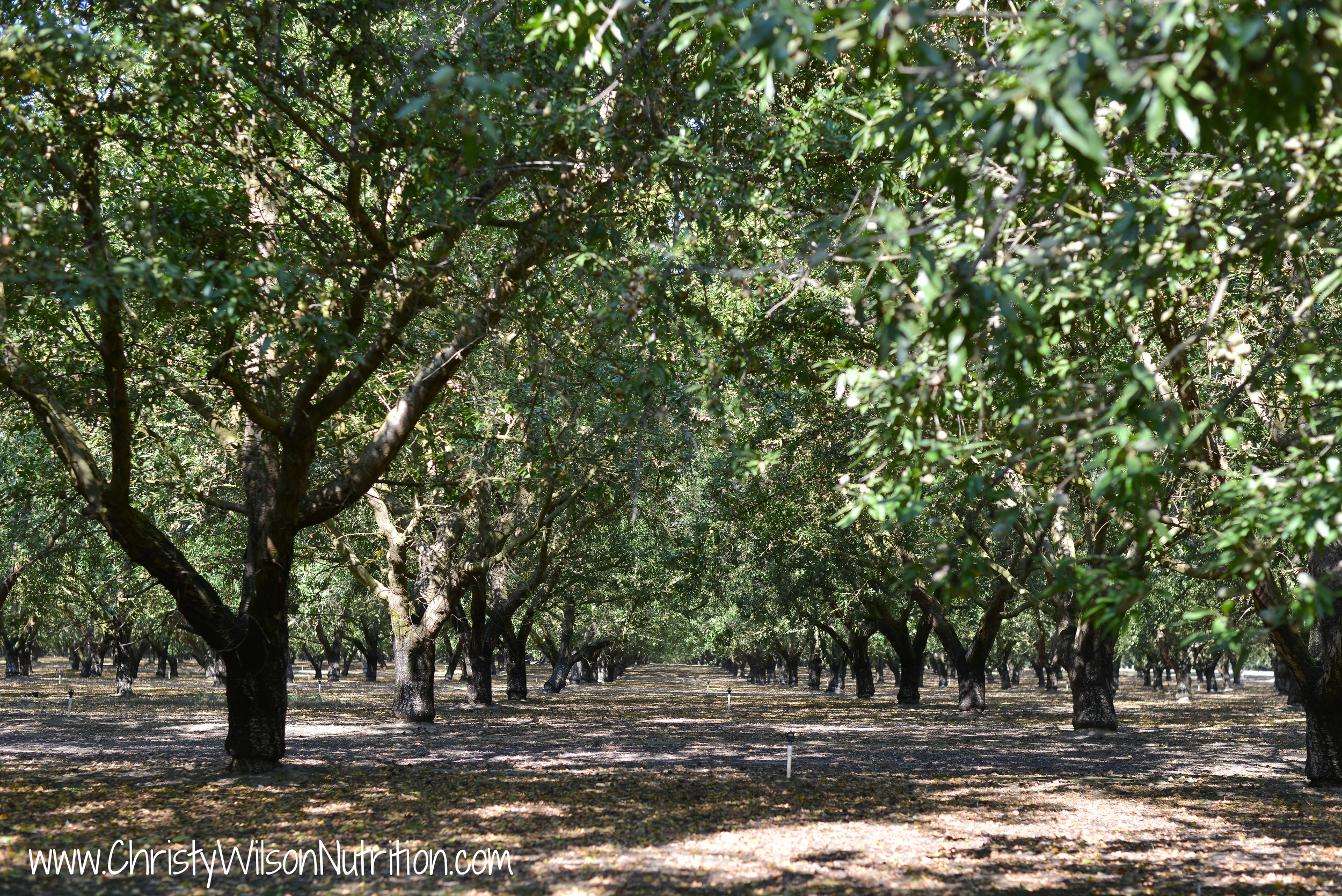 My Almond Orchard Experience with California Almonds. Here we are at Travaille & Phippen, Inc. in Mateca, California.