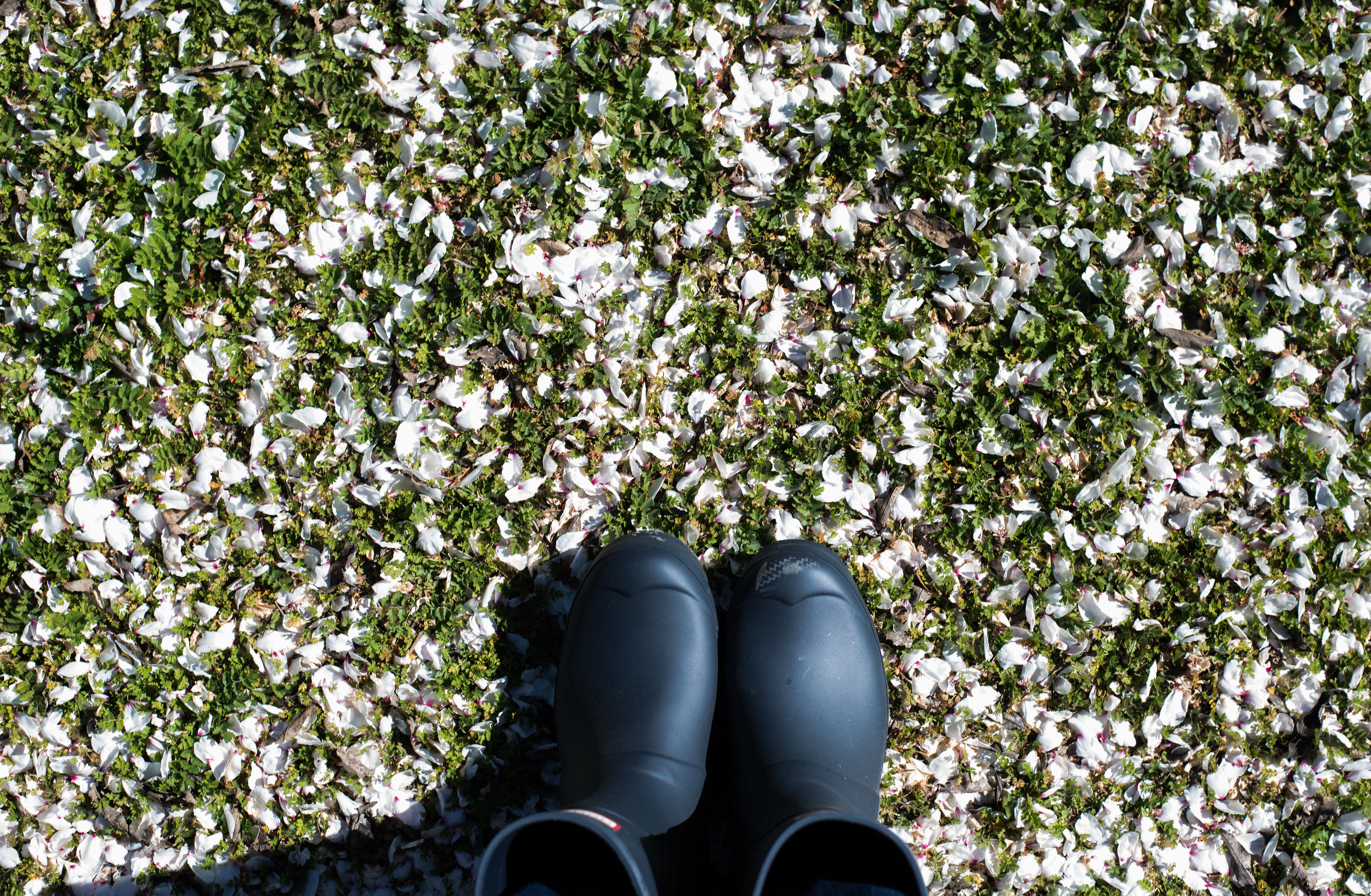 Boots in an almond grove