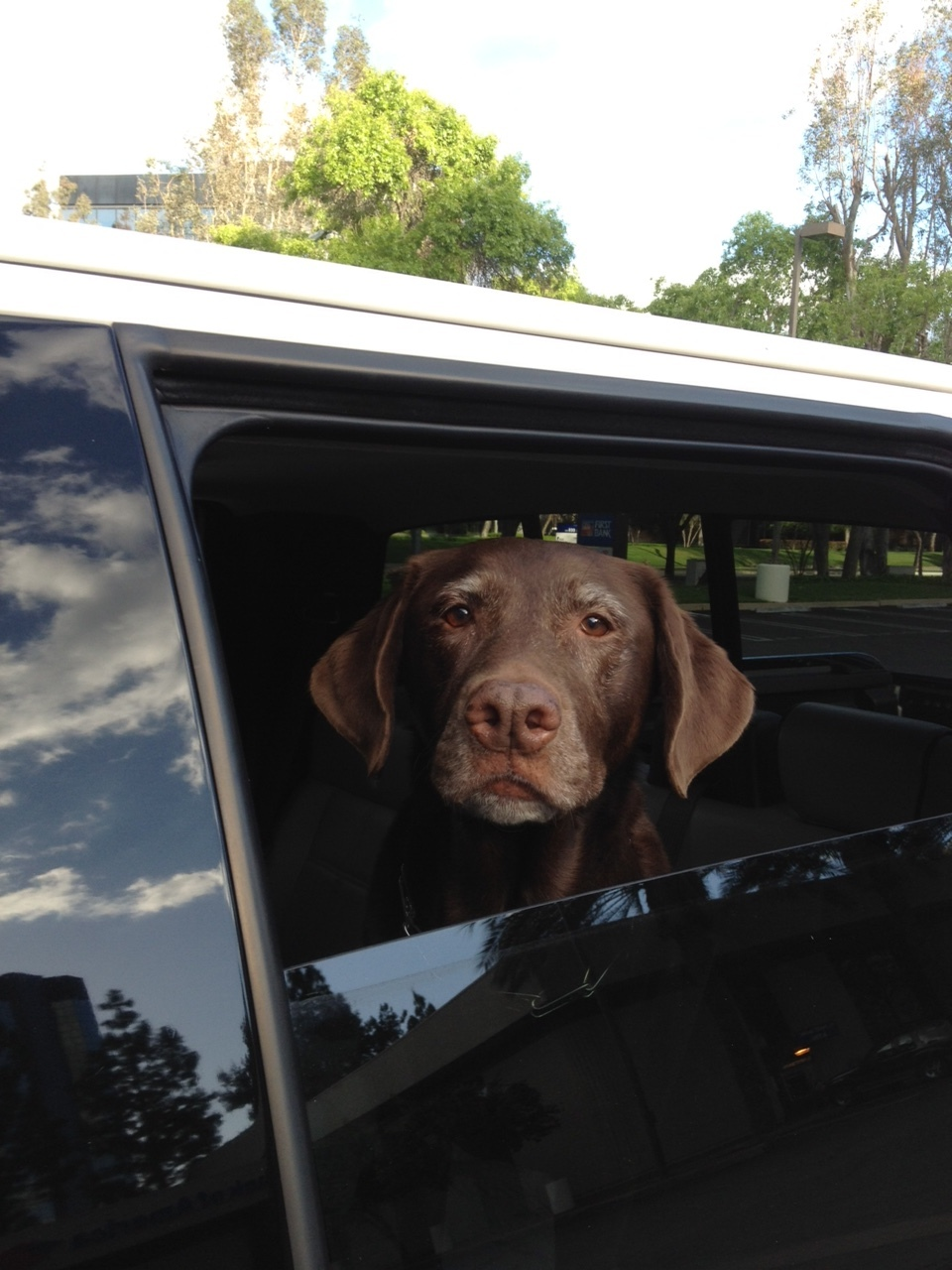 """Josey in her rightful place; back of my truck. Or should I say, """"her truck."""""""