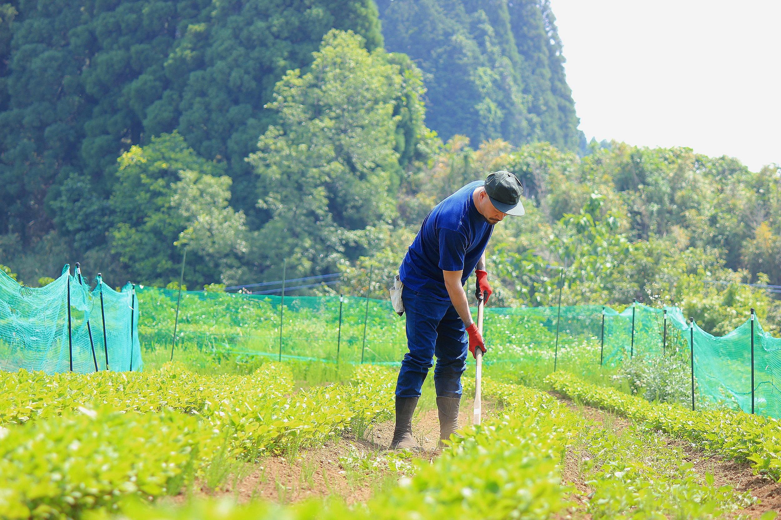 Black Bear Brand in Japan, Organic Indigo Farm