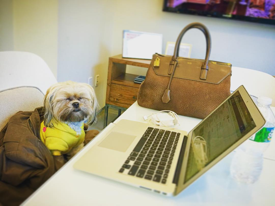 How is it only Monday?? 😑💻📱  ||  #Mondays #werk #puppies #babyanimals #furry #nyc #chelsea #downtown #manhattan #ootd #puppiesofinstagram #yorkie #shorkie #shihtzu #openhouseny  (at Core Real Estate NYC)
