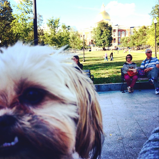 Bibi feeling a little overwhelmed by the academia in Boston 🙍📓✏️📒 (at Boston Common)