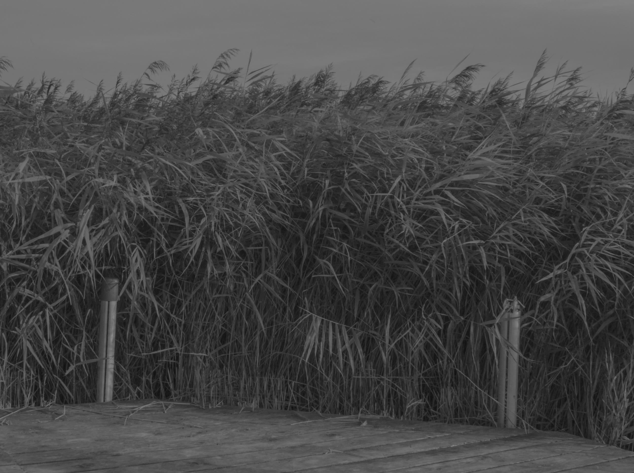 Grass Dock.jpg