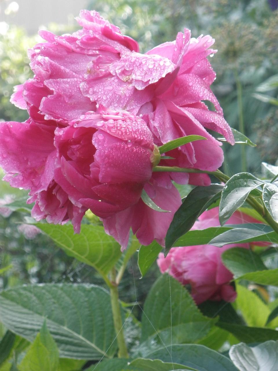 June 11, 2010 ABM 041.JPG