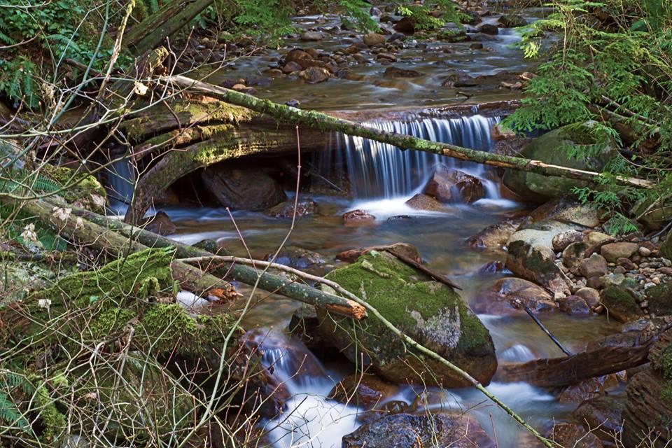 Scott Creek below Eagle Mountain Drive, Coquitlam (Photo: Ed Paulino)
