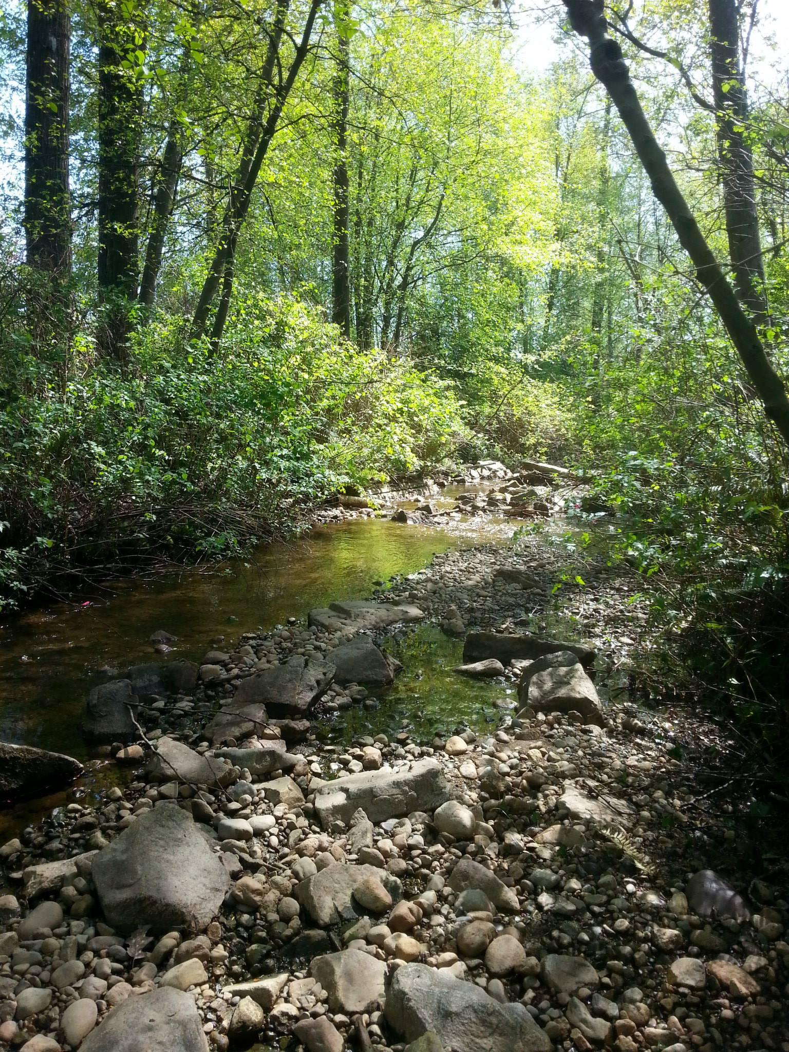 Beautiful Scott Creek, south of Guildford Way (Photo: Robbin Whachell)