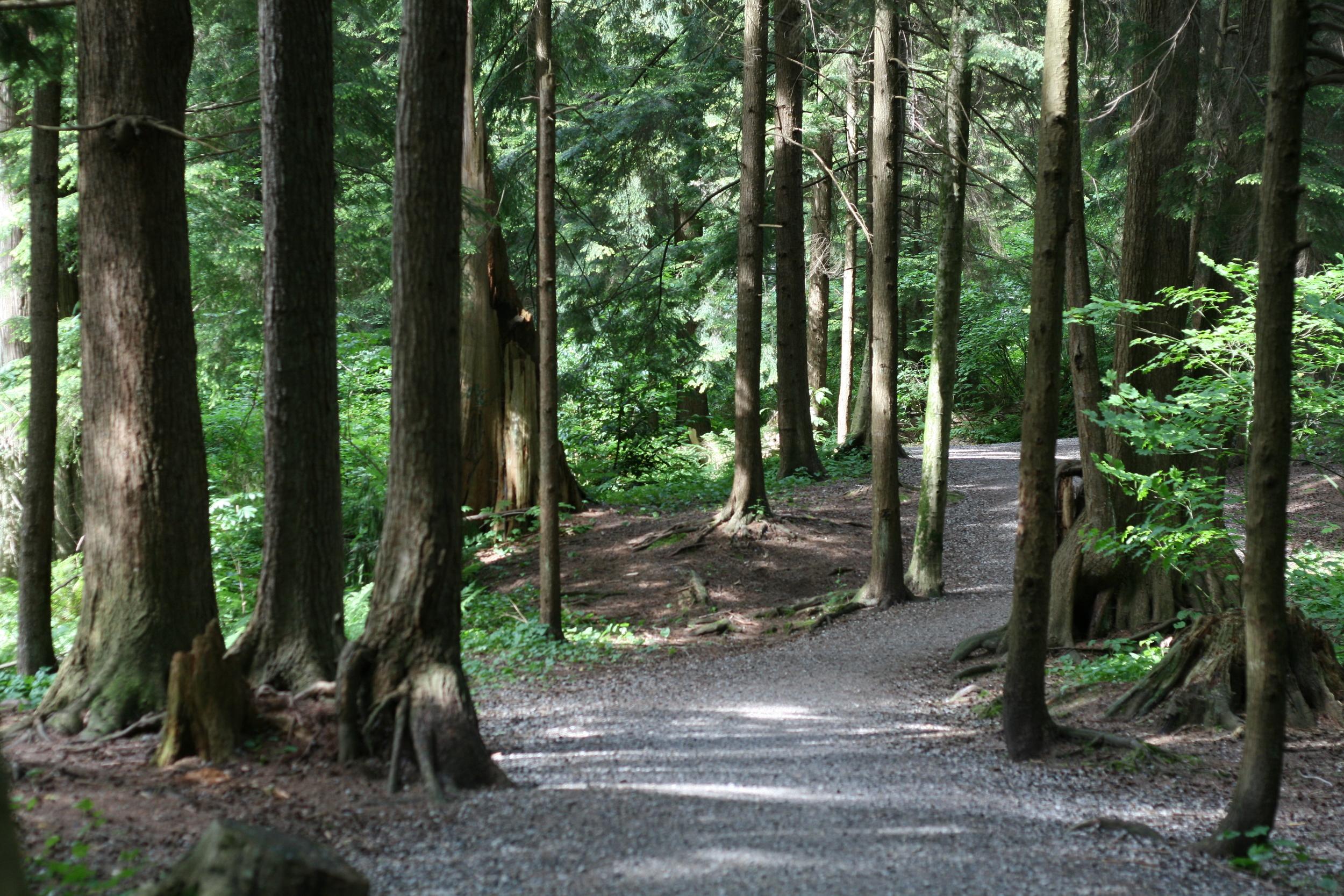 Hoy Trail (Photo: Robbin Whachell)