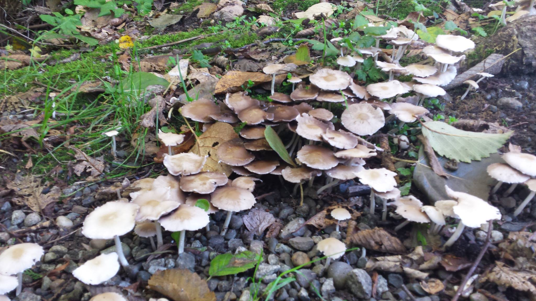 Mushroom growing along the forest floor