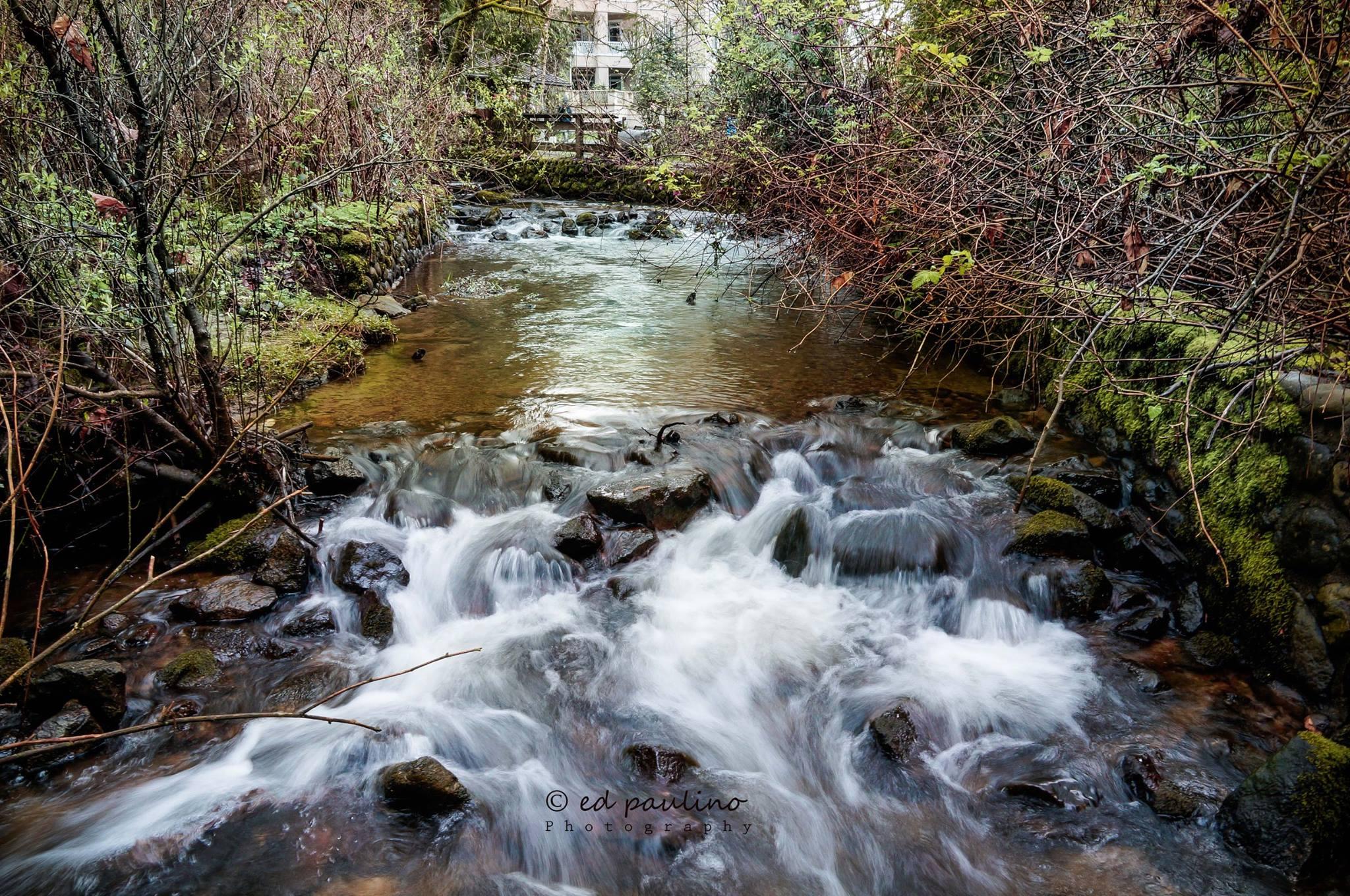 Hoy Creek, Coquitlam , close to the hatchery... (Photo: Ed Paulino)