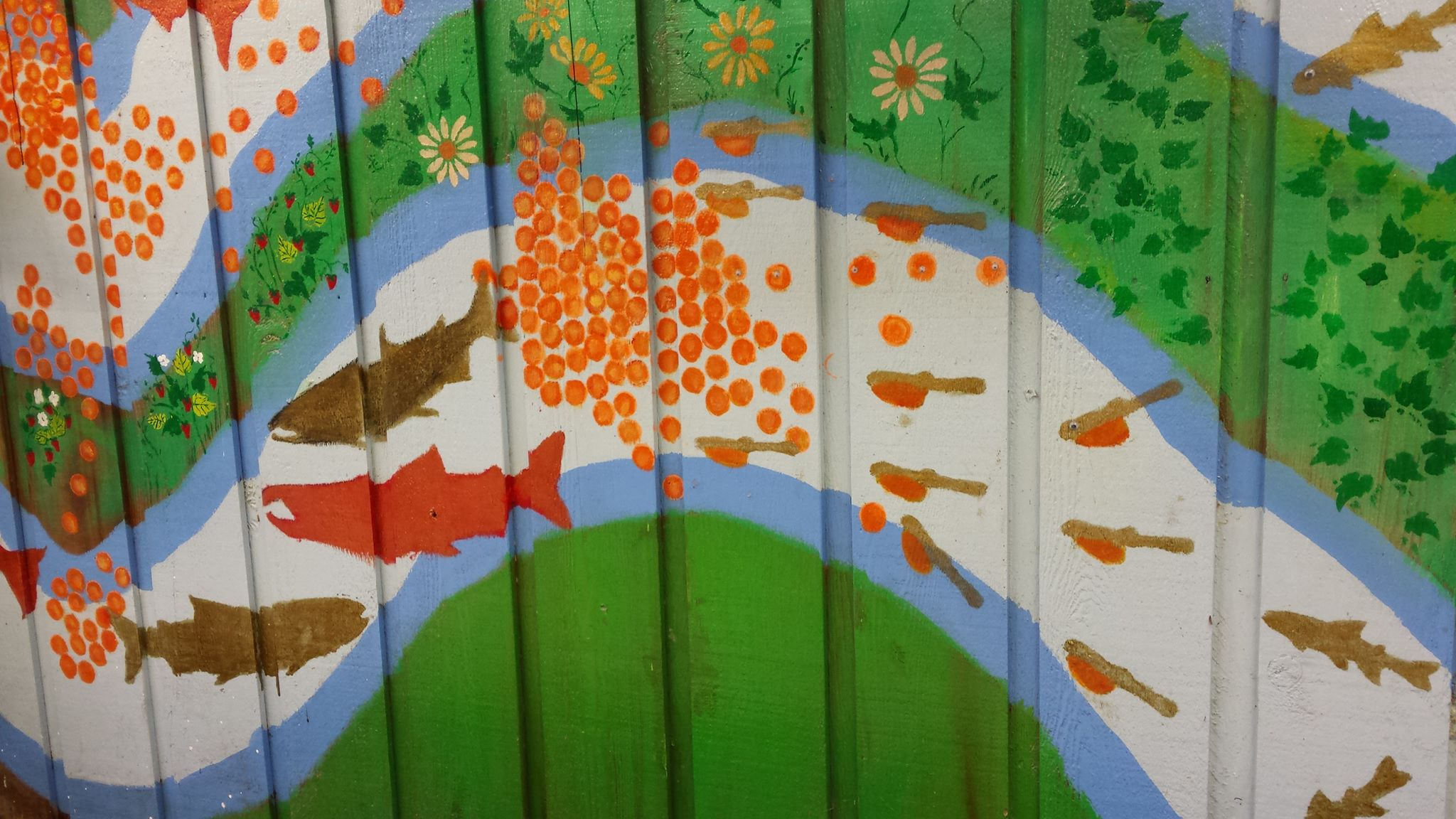 A lifecycle mural on the wall of our Capilano trough room. Artwork by Patricia Gaspar
