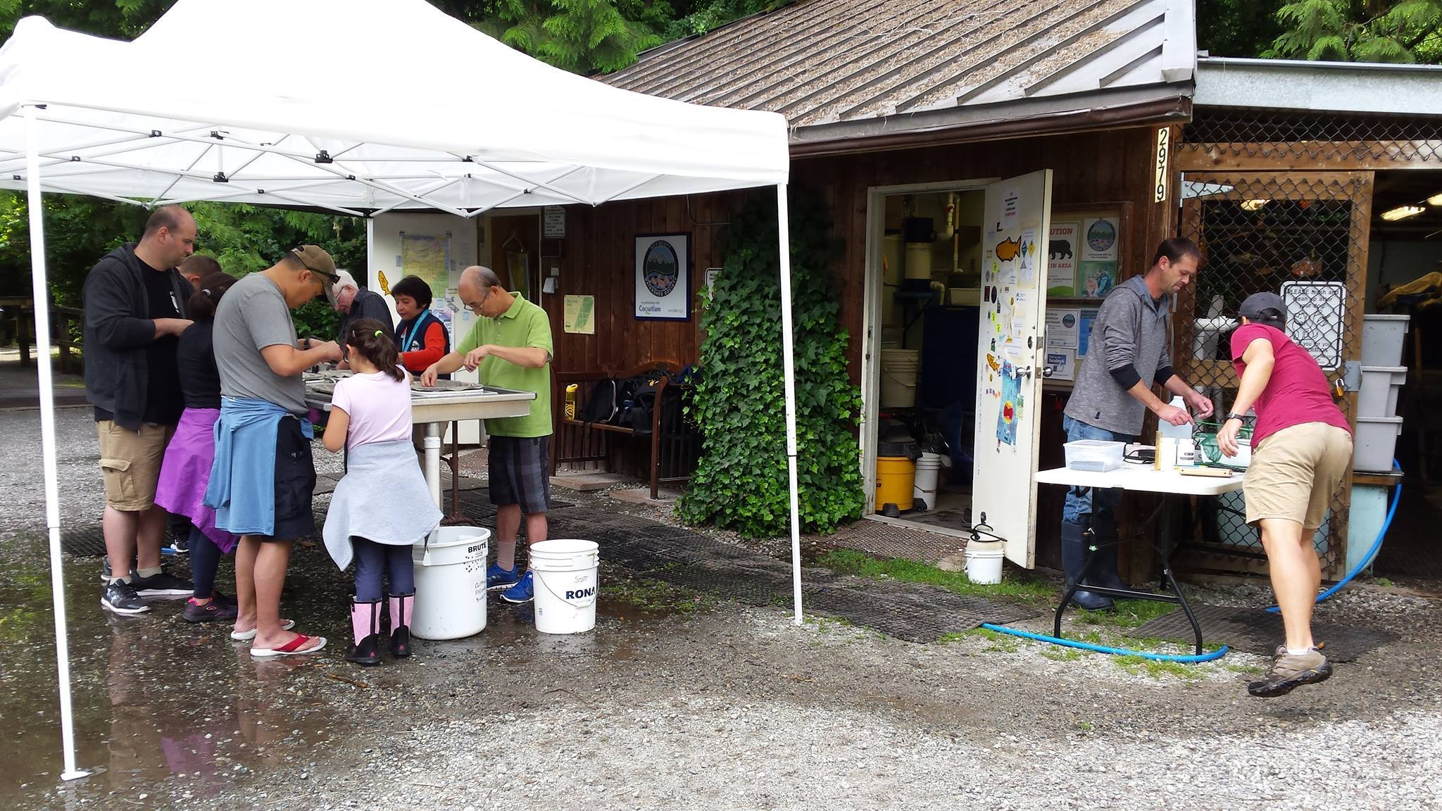 Under the supervision of the Department of Fisheries, Hoy Creek Hatchery held another successful fin-clip exercise of over 6000 coho on June 21st.