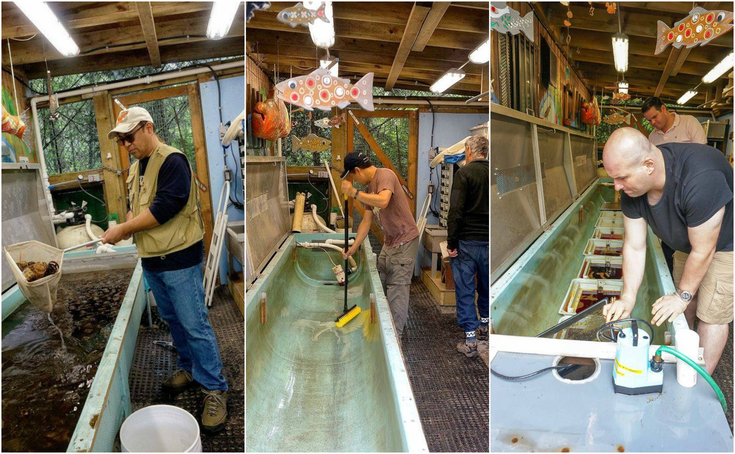 Volunteers clean and disinfect equipment in the Capilano trough room at the Hoy Creek Hatchery