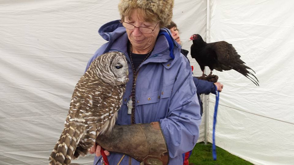 A barred owl and turkey vulture on display at Port Coquitlam's Salmon Festival