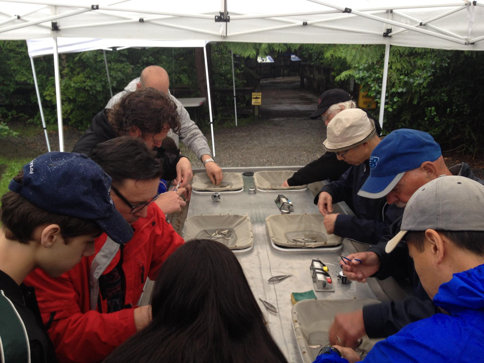 Many hands make light and fast work! Hoy-Scott Watershed Volunteers during our fourth annual fin-clipping exercise