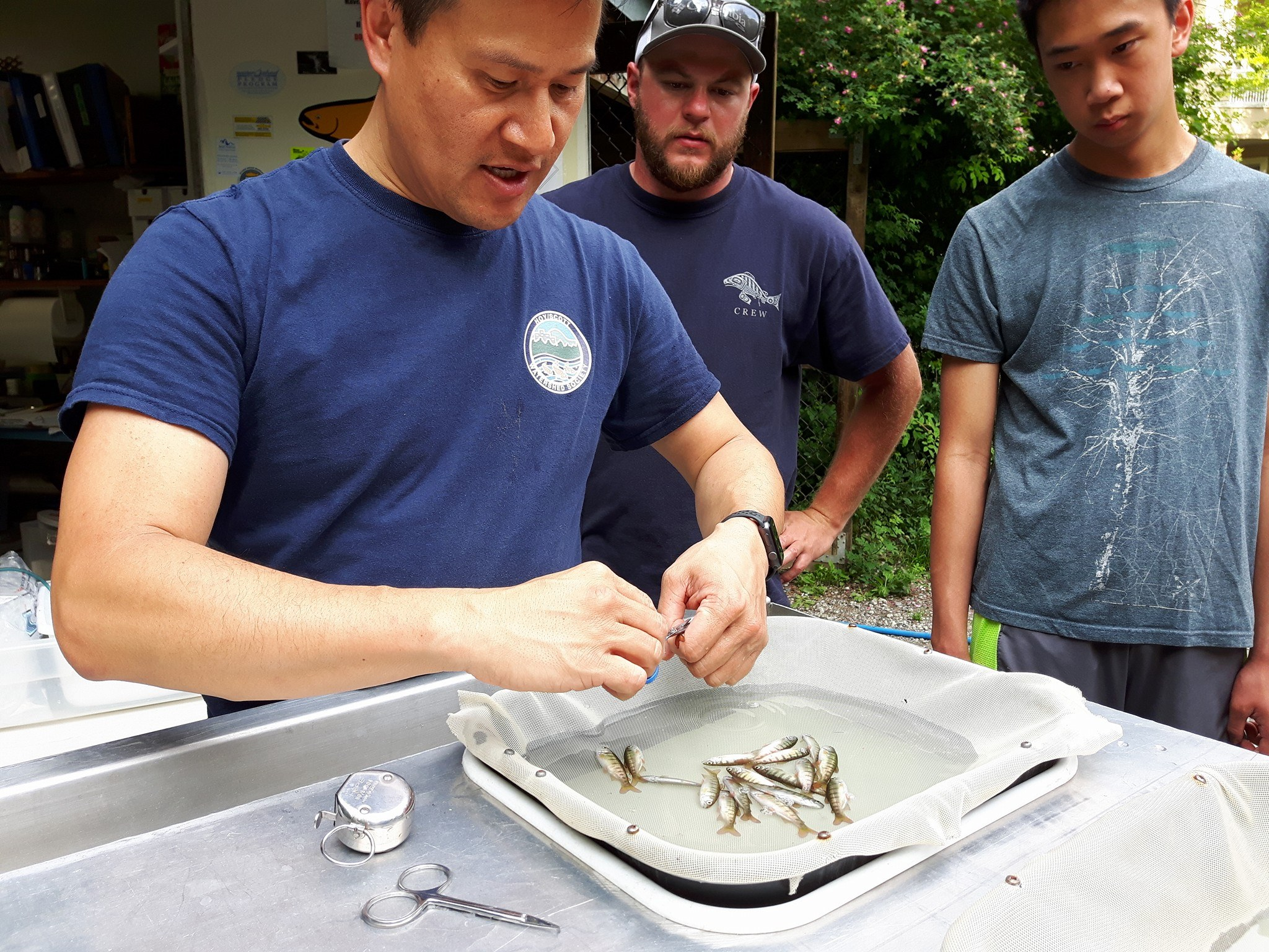Hatchery manager Rodney Lee demos the adipose fin-clipping procedure as Tyler Thibault of the DFO looks on (center).