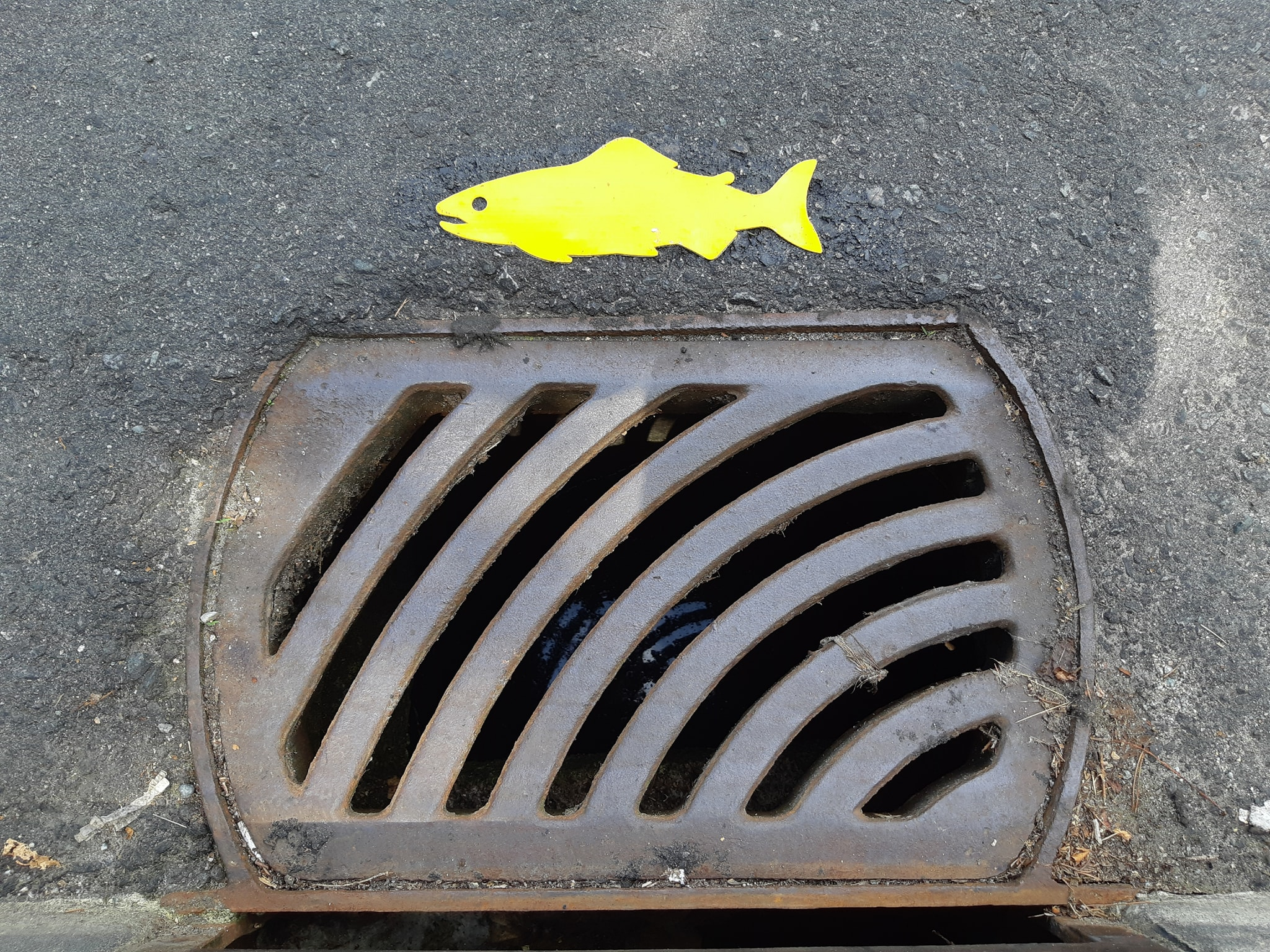 A new fish marker by a storm drain. HSWS members will be updating storm drains on streets north of the hatchery over the summer months. (HSWS photo)