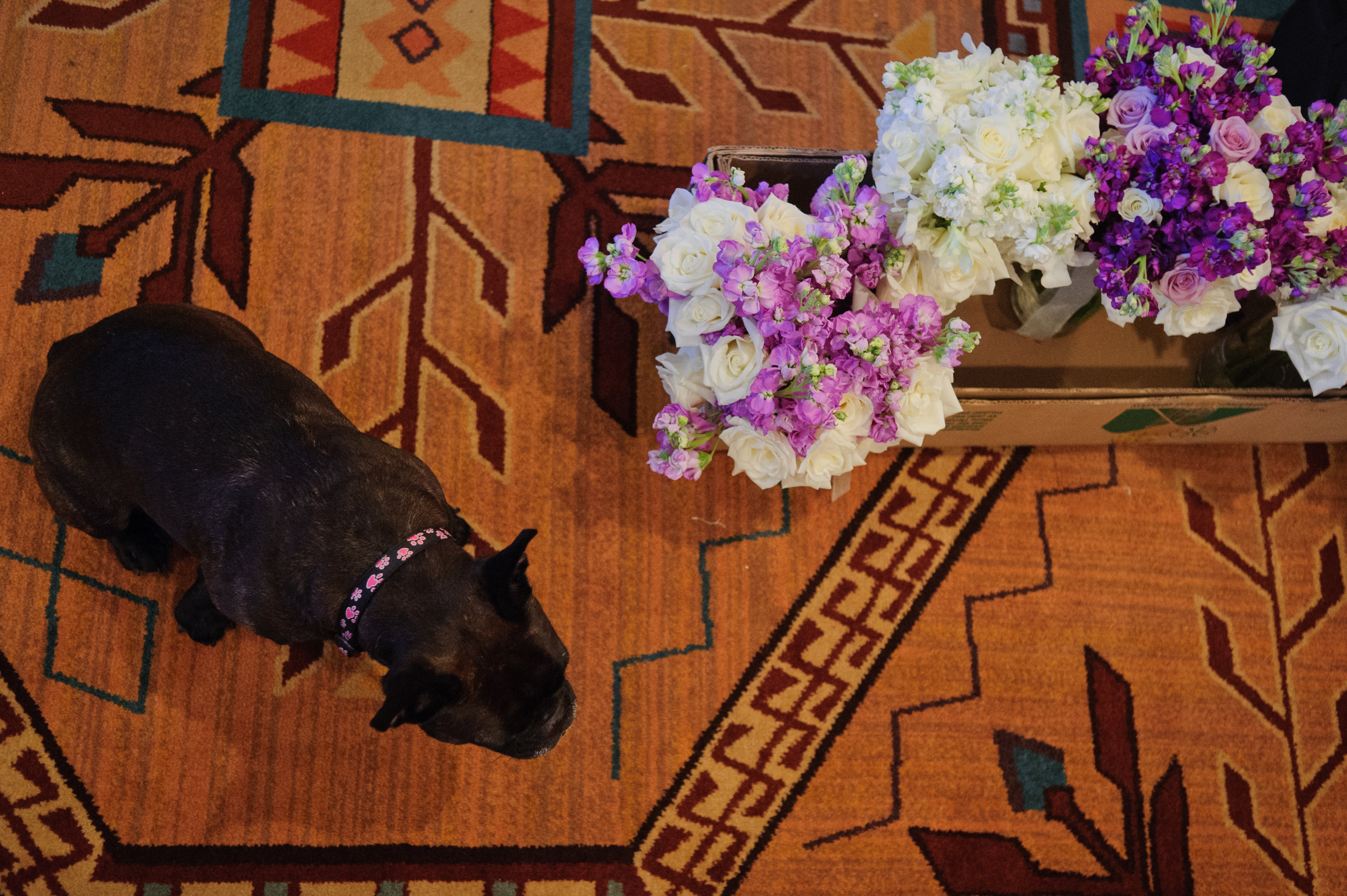 2 puppy at wedding puppy with flowers at wedding purple and white bouquets Sergio Photography Life Design Events.JPG