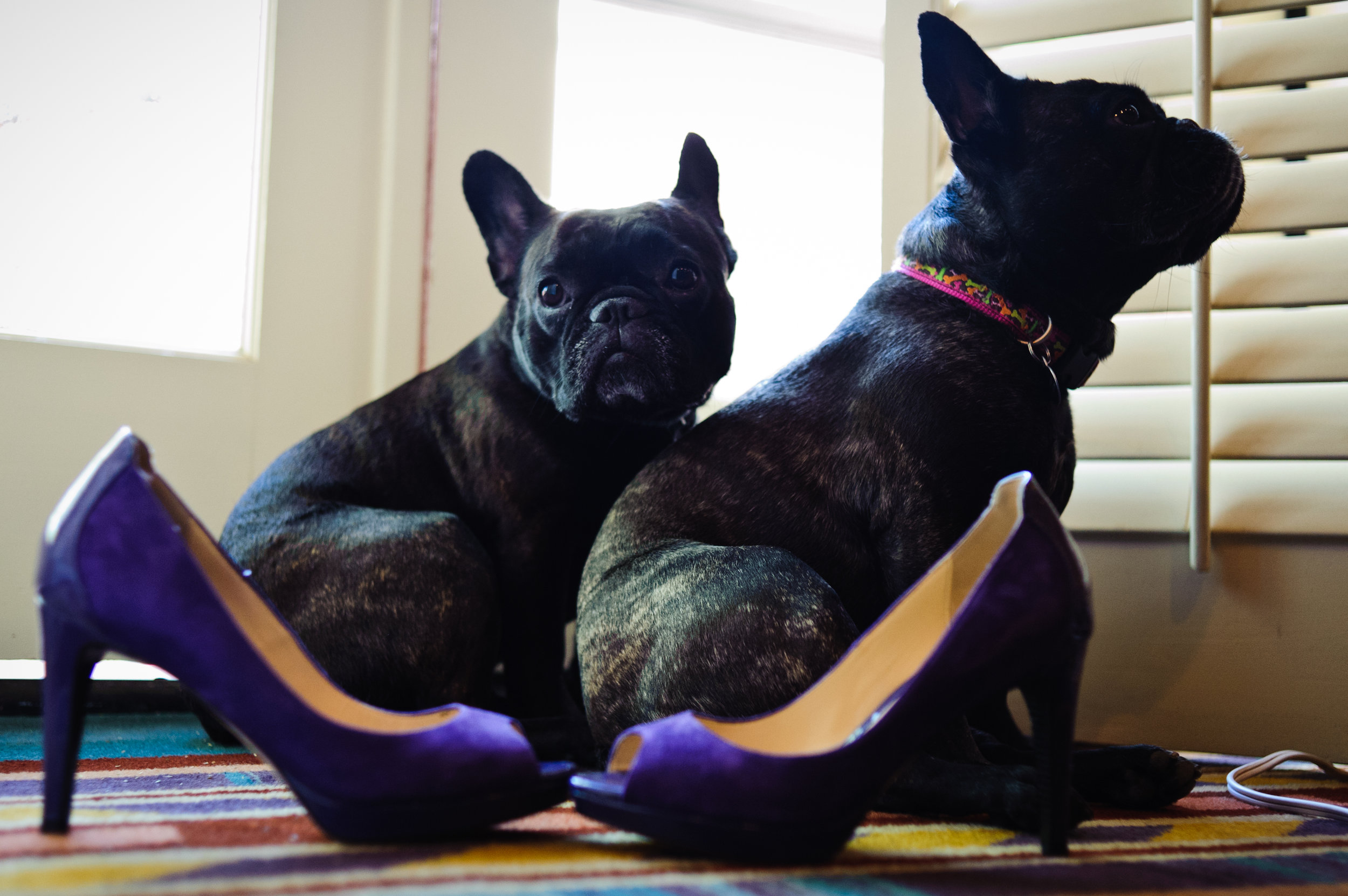 3 puppies at wedding french bulldogs at wedding purple wedding shoes Sergio Photography Life Design Events.JPG