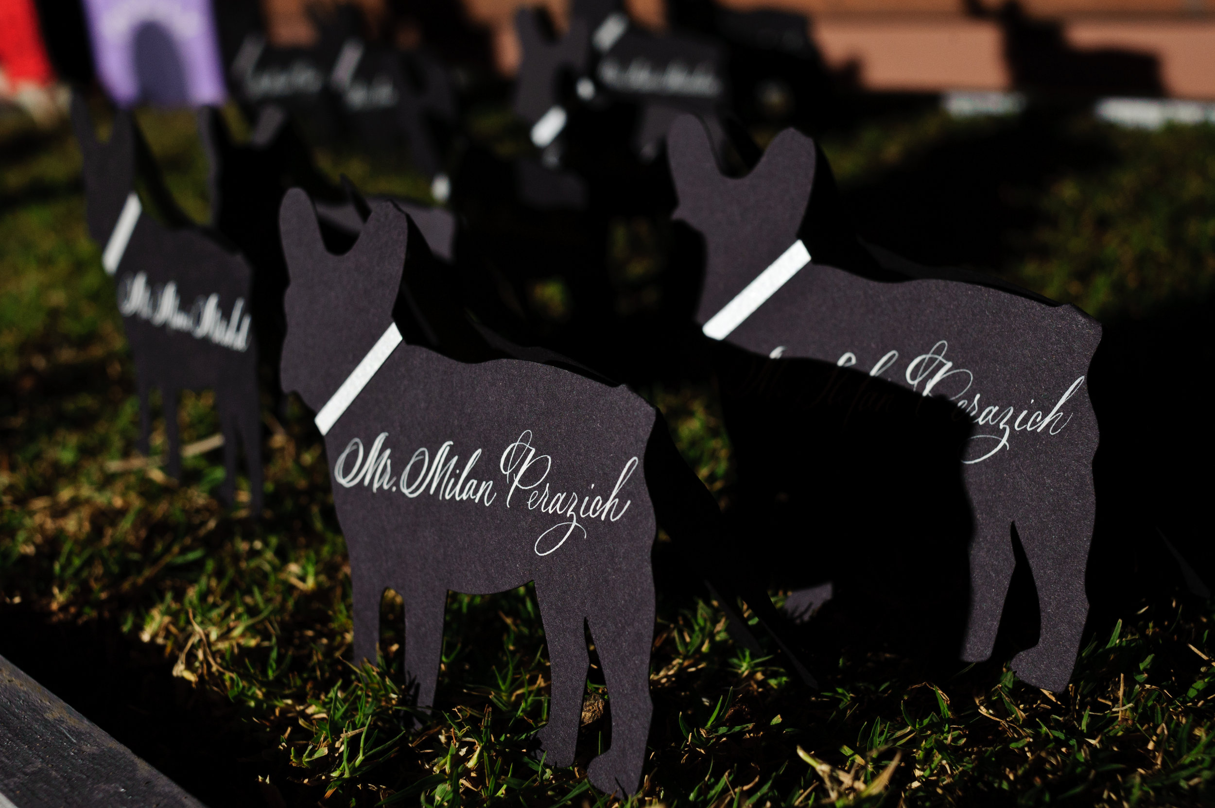 26 dog place cards unique place cards simple place cards Sergio Photography Life Design Events.JPG