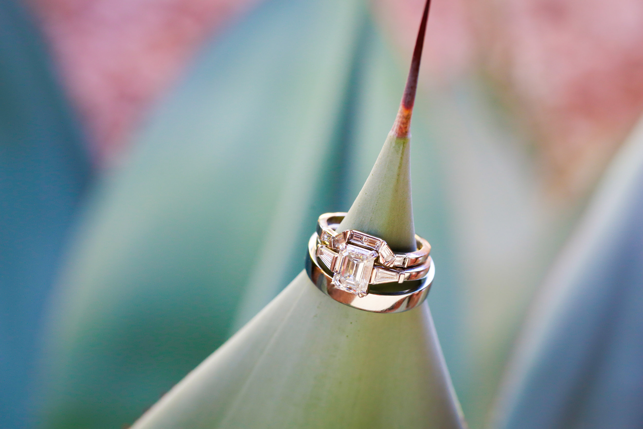 2 wedding rings on plants wedding bands on plant photo Mod Wed Photography Life Design Events  .jpg