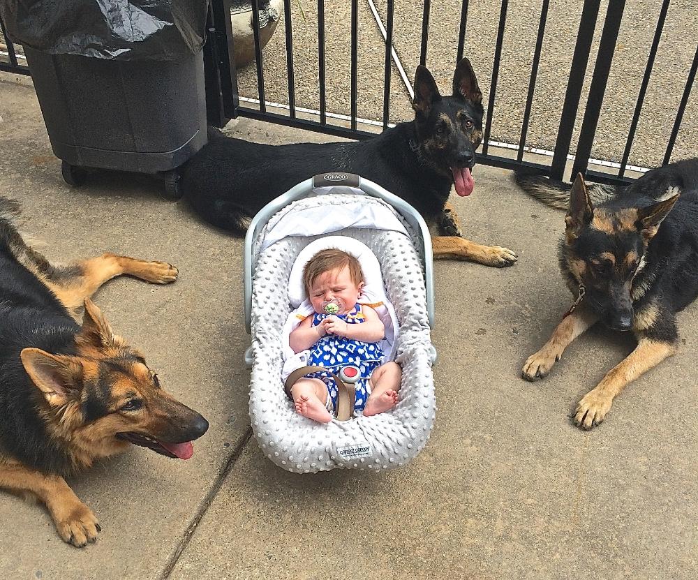 MAK9_Baby_Dogs.jpg