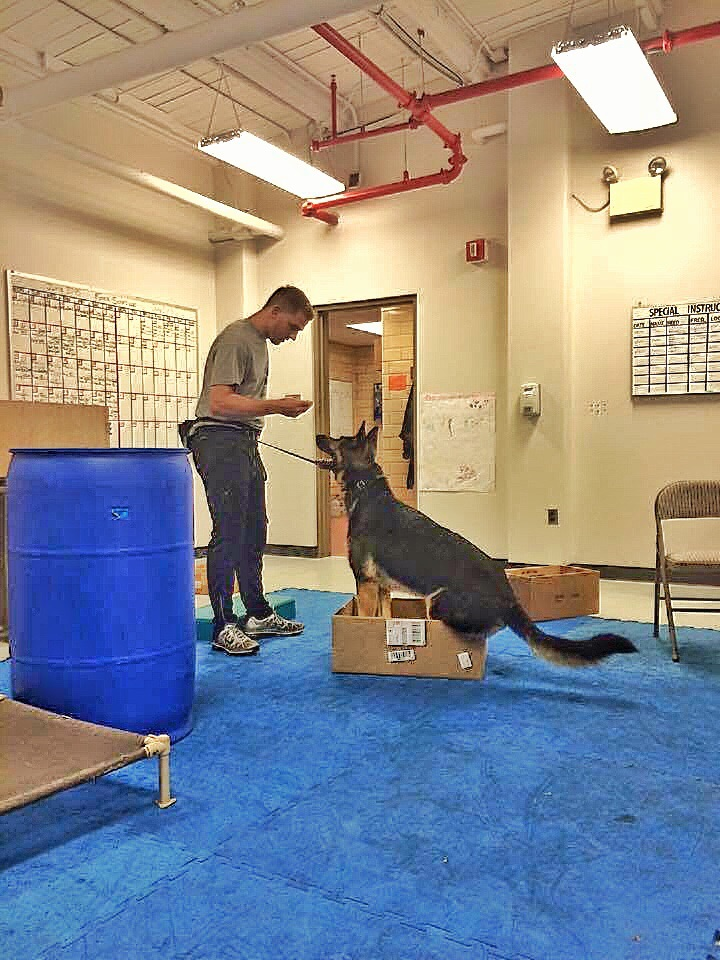 What looks stupid to us can be a good test and challenge for our dogs. I learned something as simple as a box makes a dog use his back back legs. Most dogs don't realize or have their back leg awareness. They can't just walk into the box, they have to consciously lift their back legs one at a time into the box.
