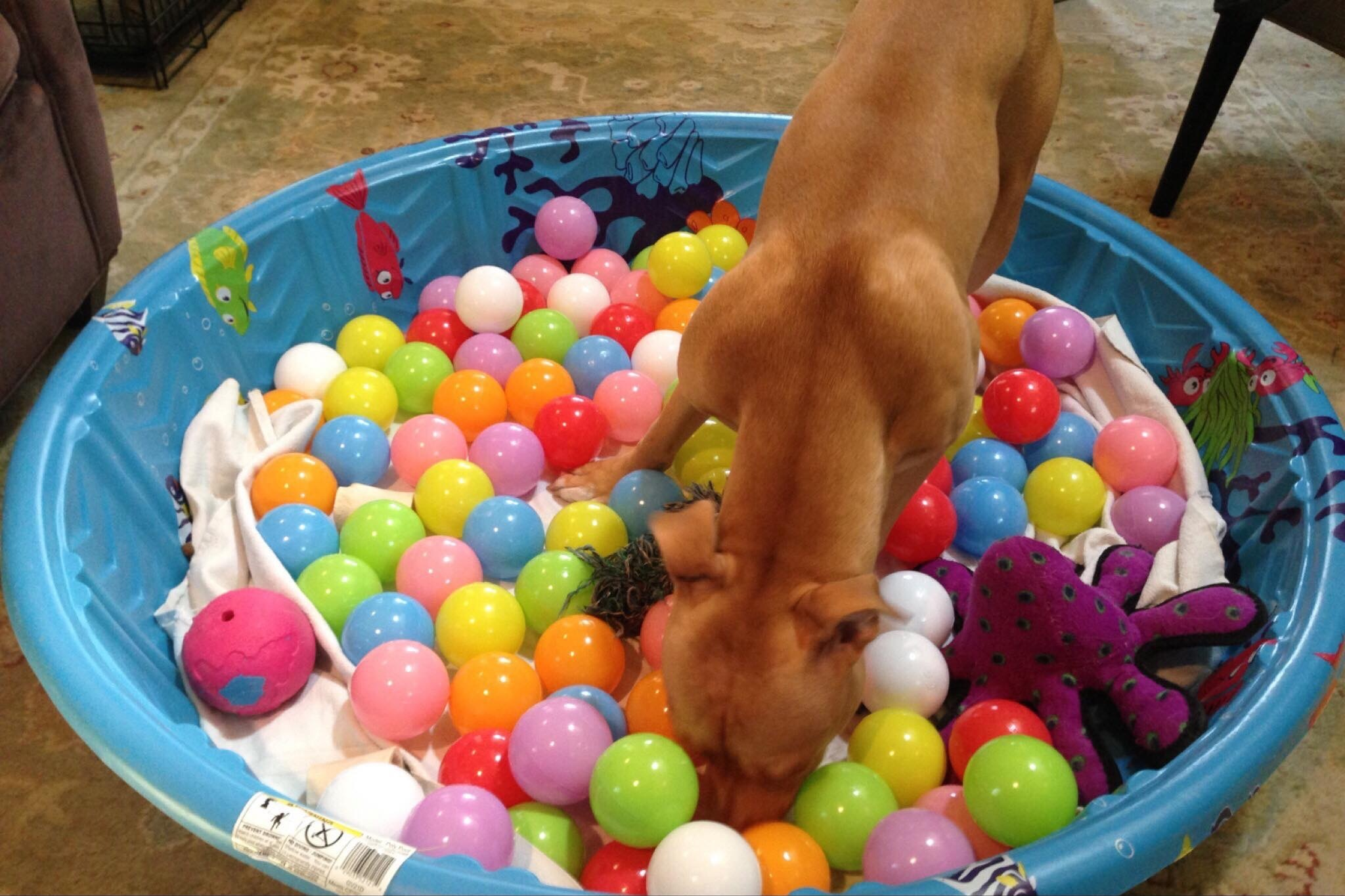 Baby Pool with Objects