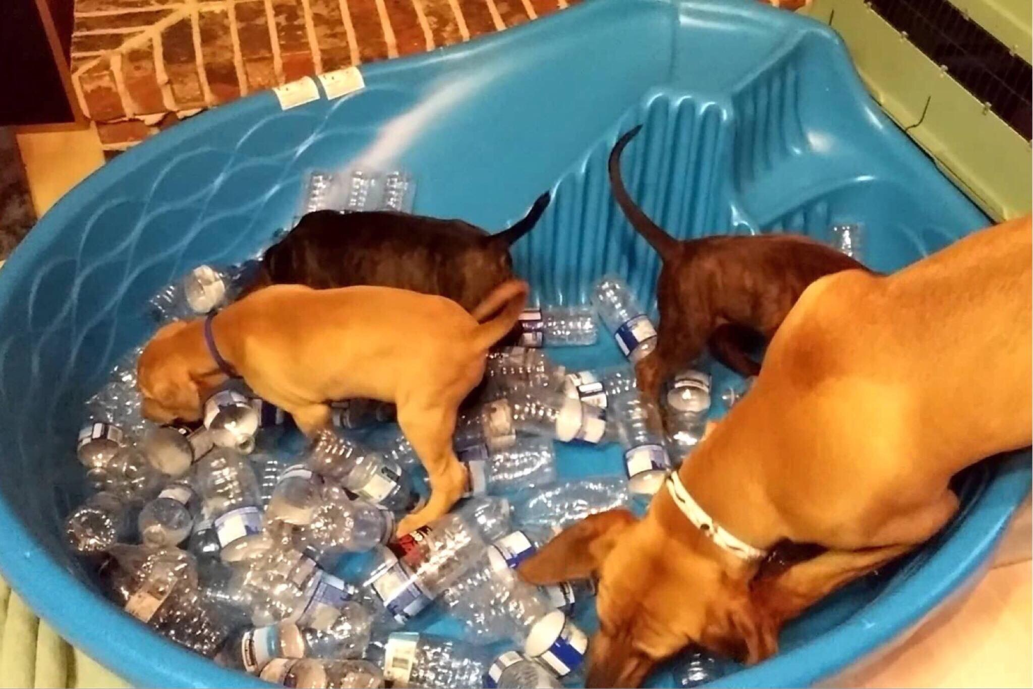 Baby Pool filled with Kibble and Bottles