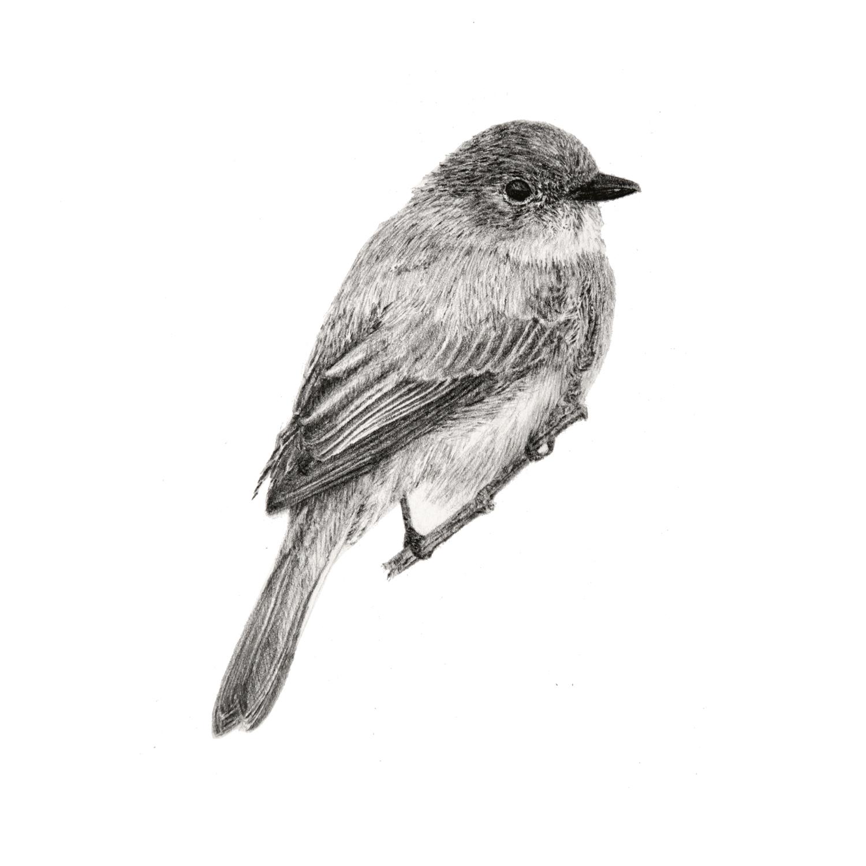 Birdie_II.jpg