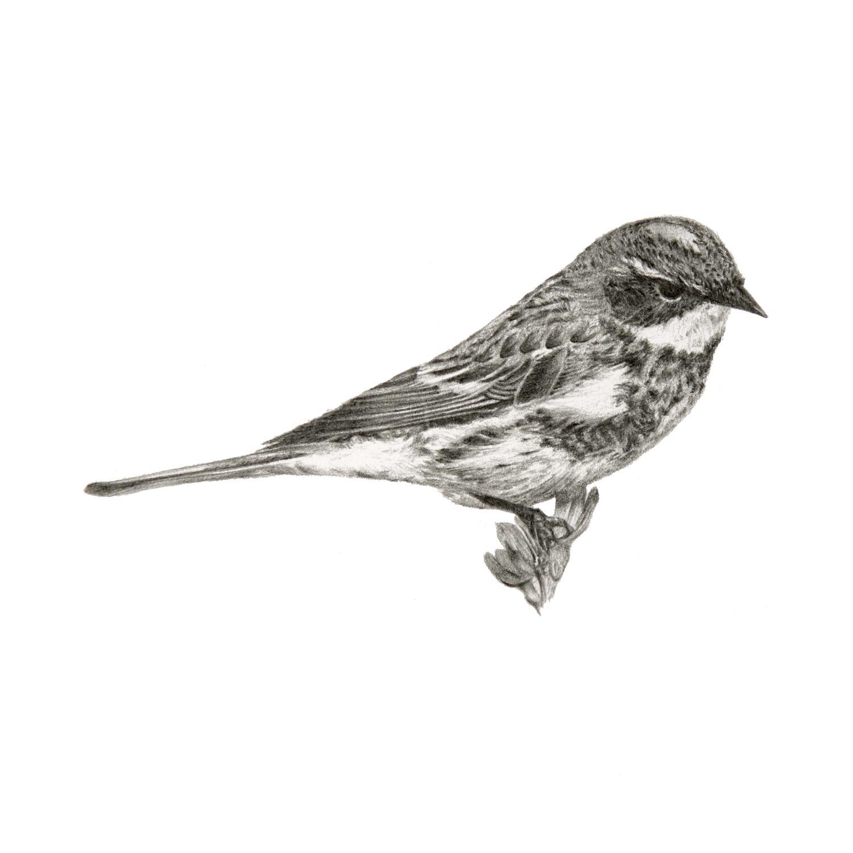 Birdie_III.jpg