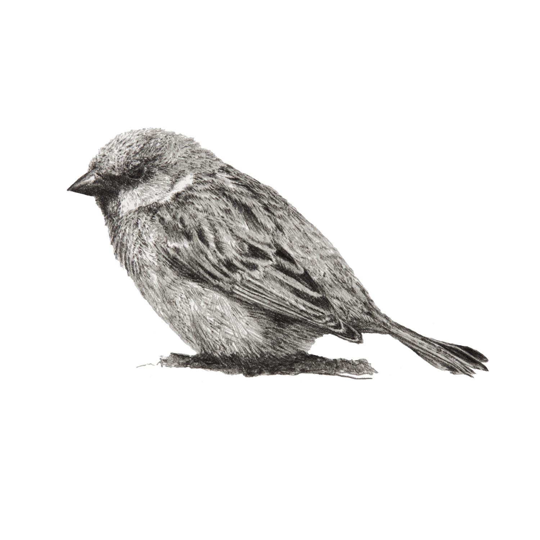 Birdie_IV.jpg