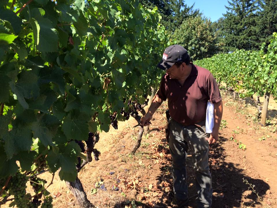 Efren Loeza, vineyard manager at Willamette Valley Vineyards, has excellent attention to detail. The 2013 releases from the winery were excellent.
