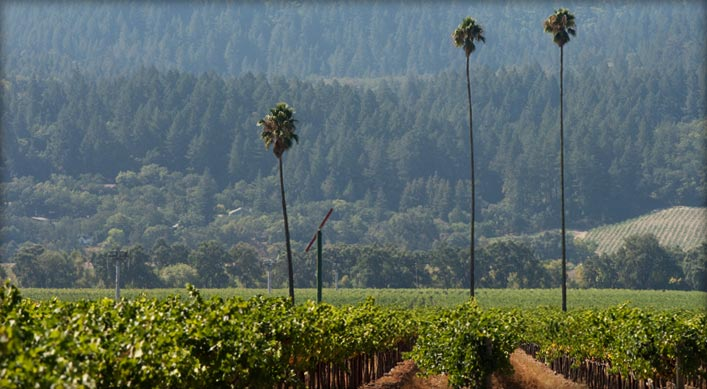 Absolutely gorgeous shot here of the Duckhorn 'Three Palms Vineyard' which is one of Napa's premier sites for Merlot