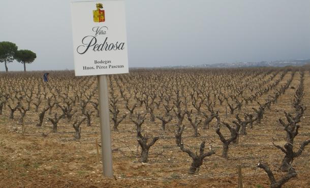 Great looking gnarled vines at Vina Pedrosa.