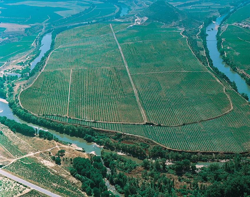 Gorgeous view here of the Bodegas LAN estate vineyard, Viña Lanciano.