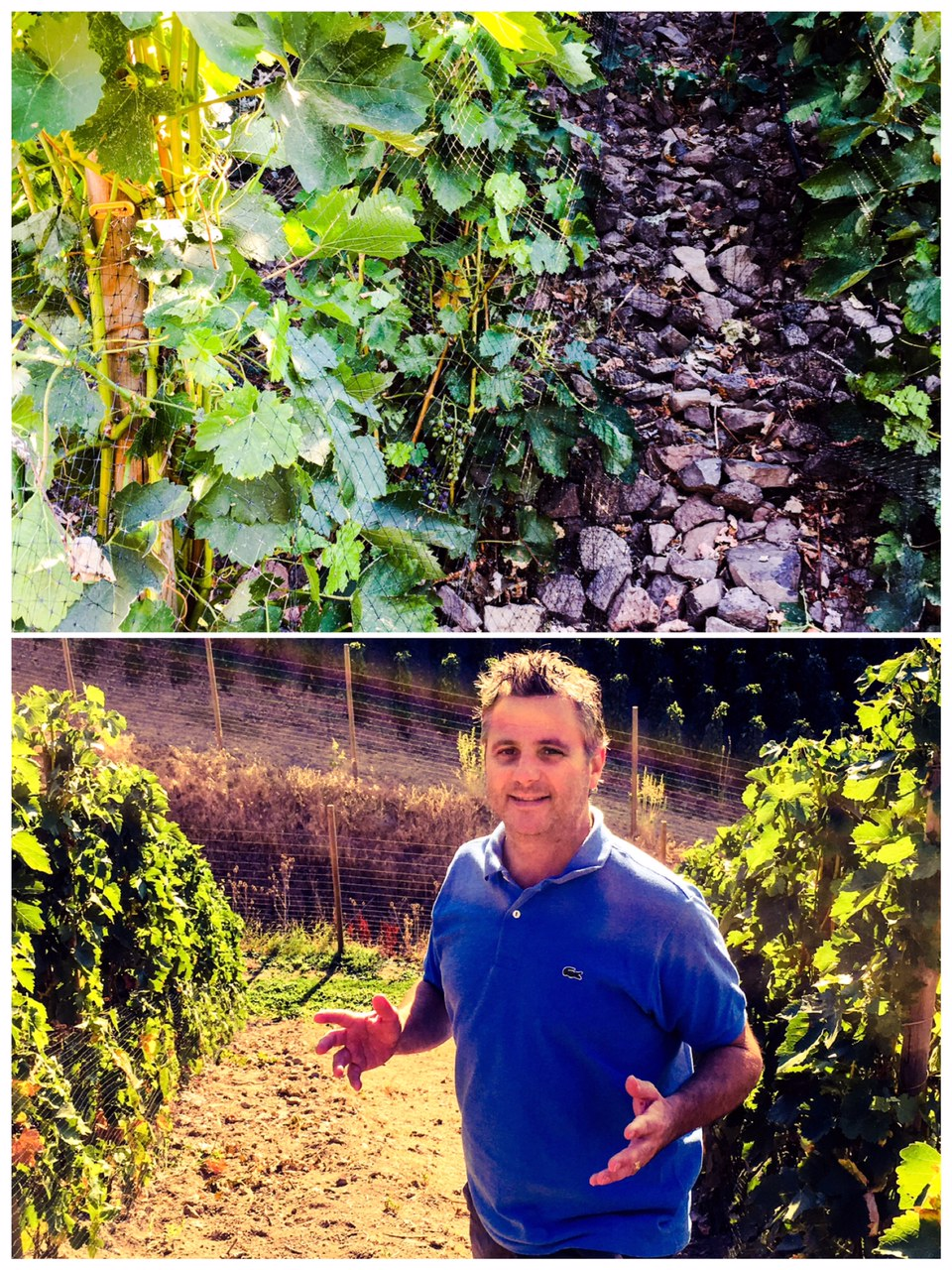 Great photo of superstar vigneron, Christophe Baron, in his Hors Catégorie Vineyard, which is largely set on fractured basalt.