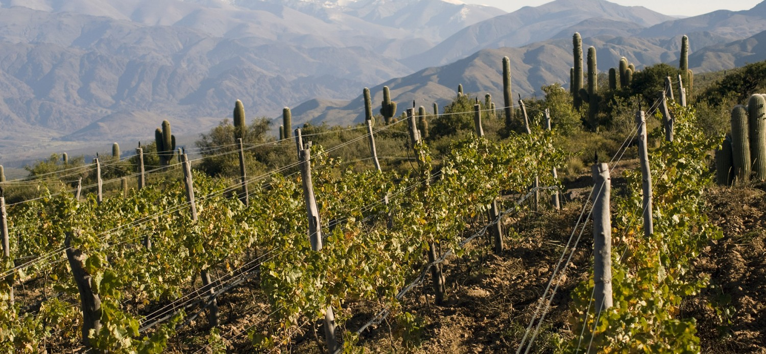 Gorgeous photo here of the high elevation vineyards at Bodega Colome.