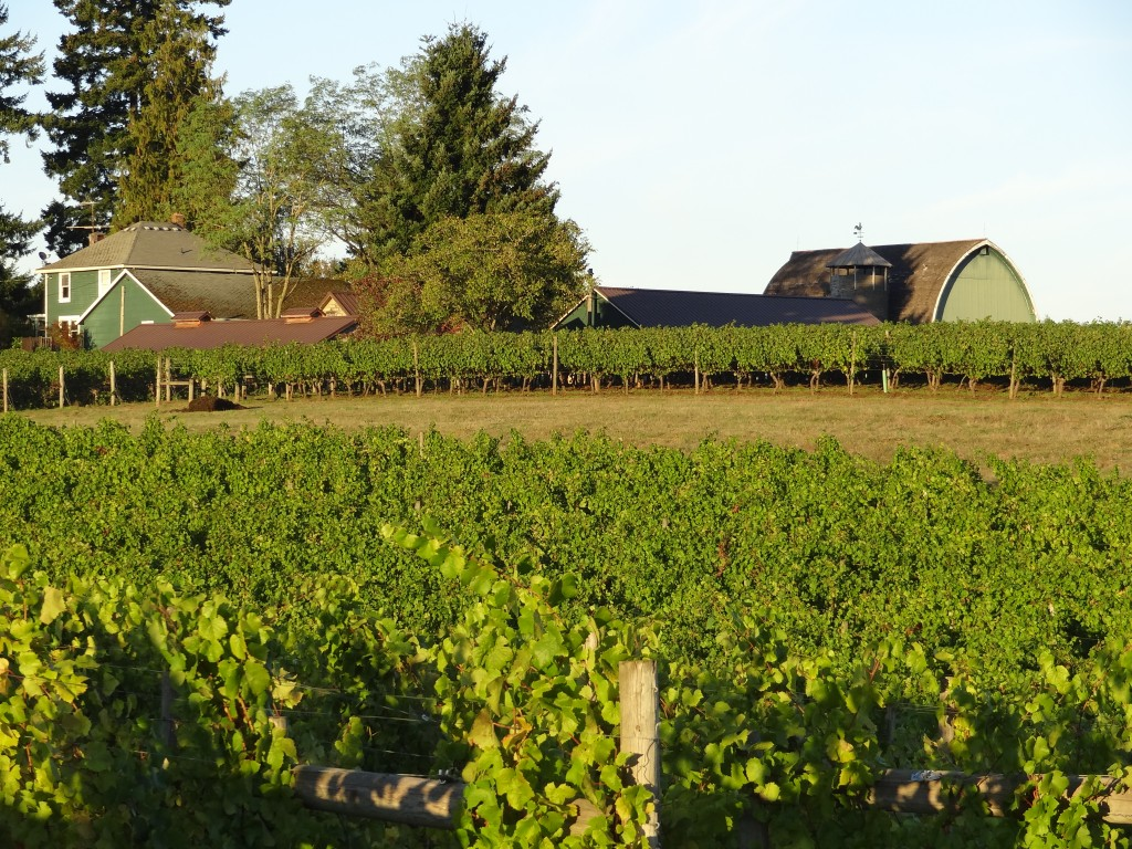 The Ruby Vineyard has some of the oldest Pinot Noir vines in Oregon, which were first planted in 1973.