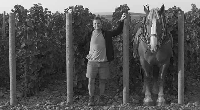 Great photo here of eminent vigneron, Christophe Baron, in his stony vineyard with his draft horse.