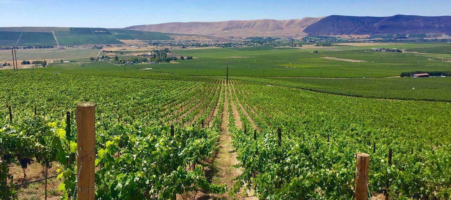 Great photo of the Longwinds Vineyard on Red Mountain.