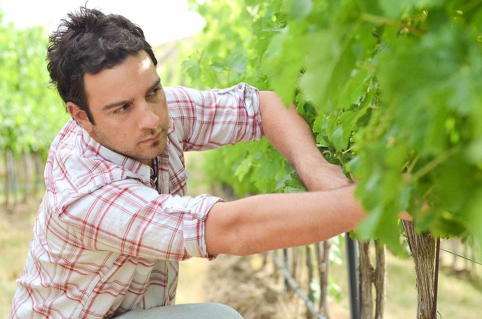 The master at work here, great photo of Corliss Estates winemaker, Andrew Trio, in the vineyard.