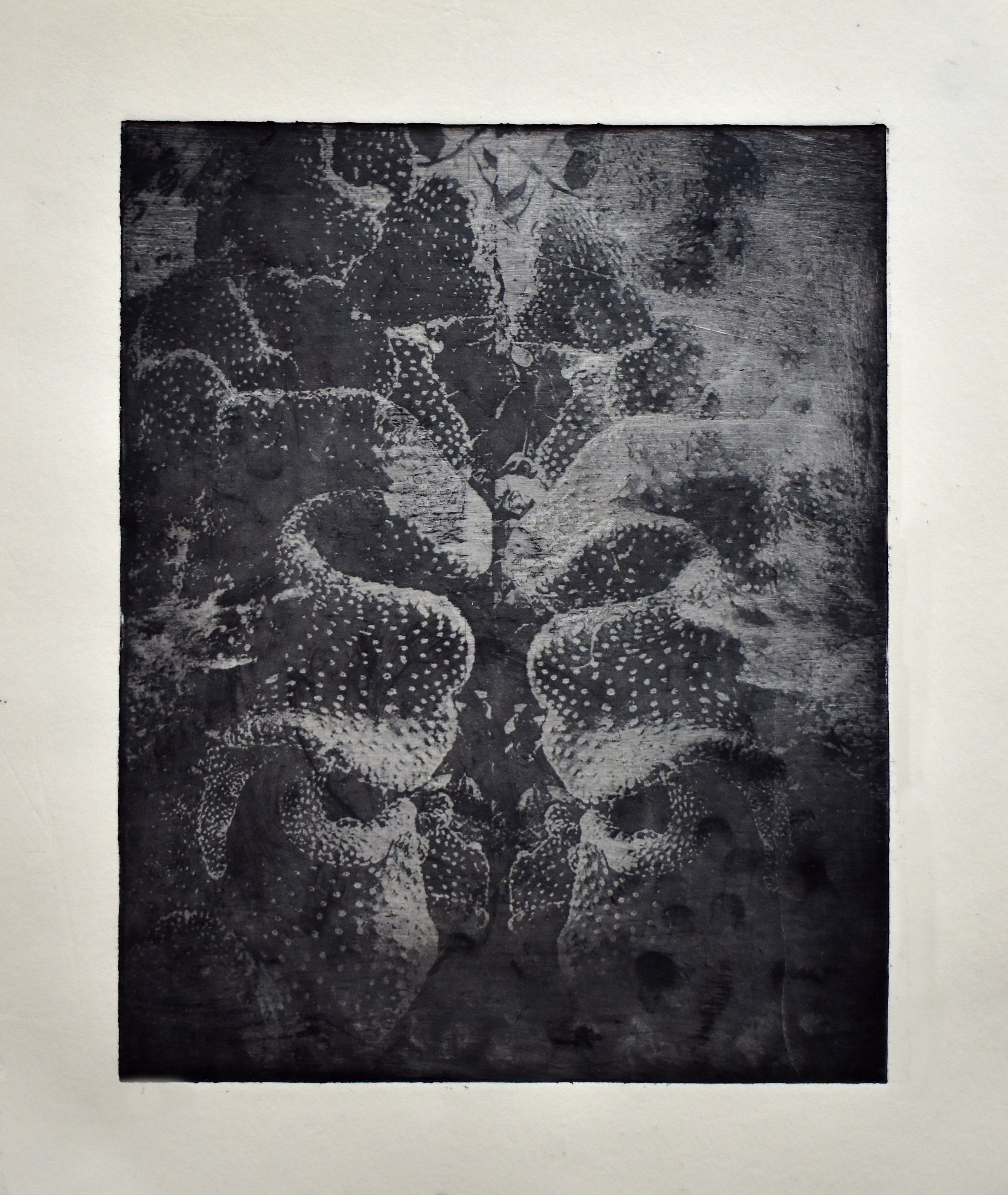Study No. 7 (opuntia rufida Cristala),  2018. Photo-etching. Superposition of macroscopic photographs of the cctus opuntia rufida Cristala cactus (Madrid Botanical Garden, Spain)and a microscopic photograph of an abalone shell collected in Sintra, Portugal.