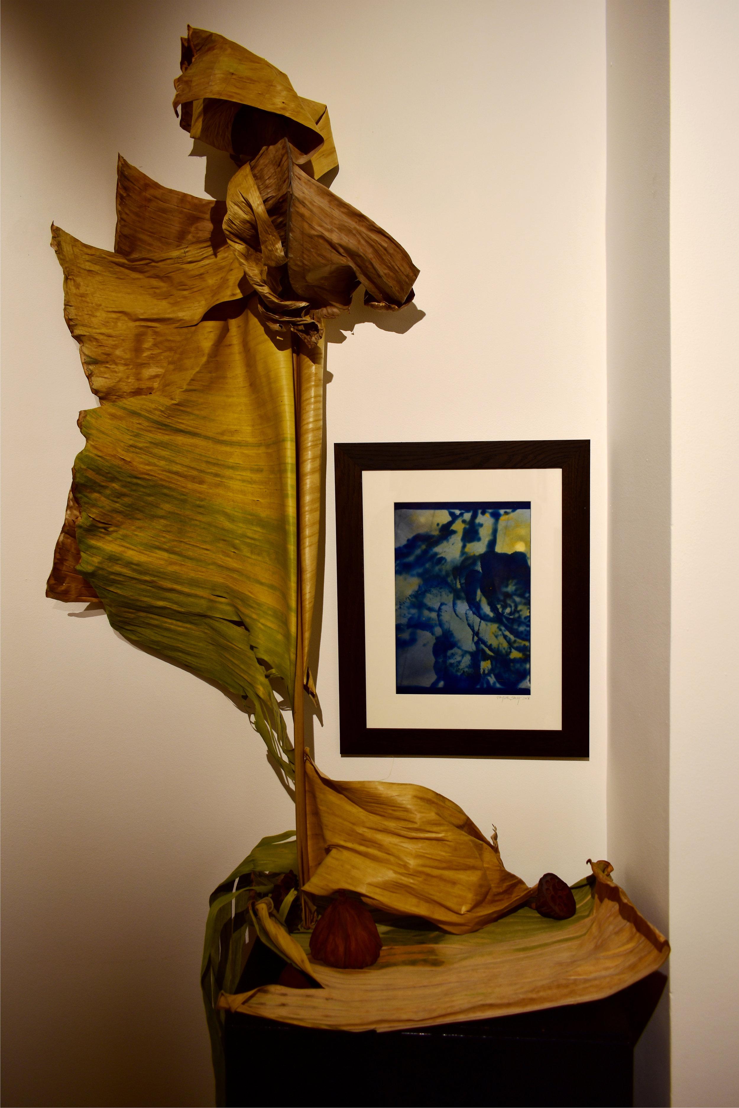 HTCF_cactus flower_installation_4.jpg
