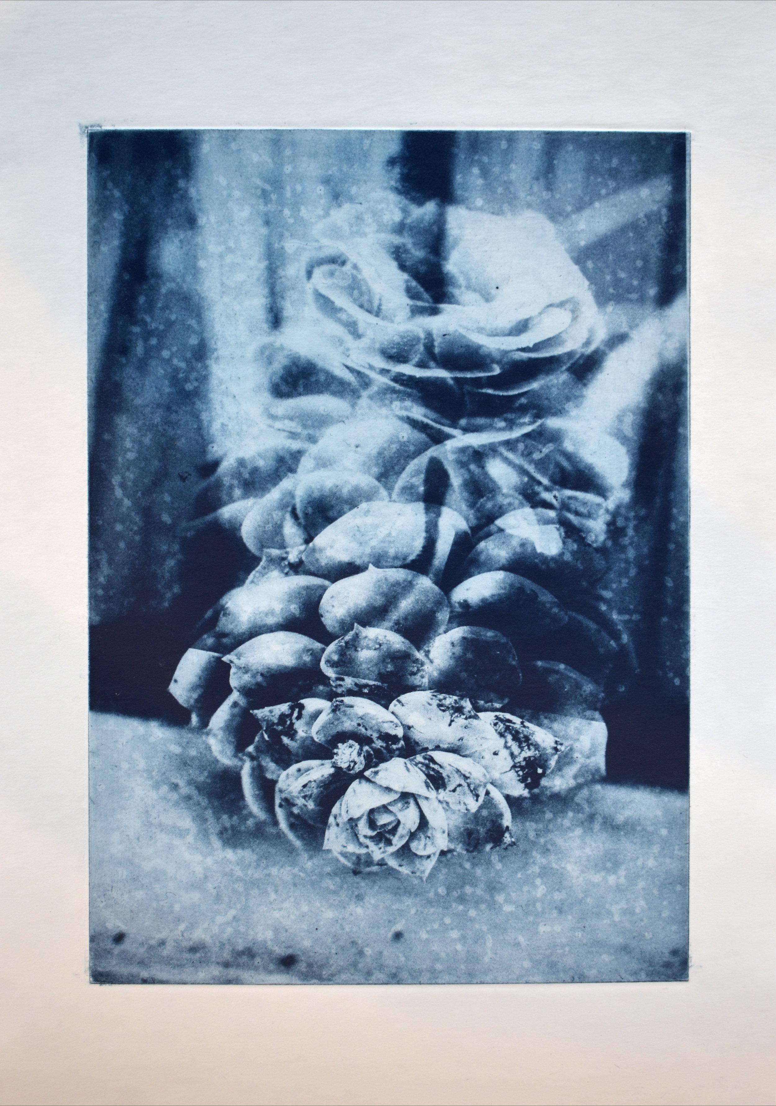 Photogravure, succulent bloom and calcite. 25 x 33cm. 2019