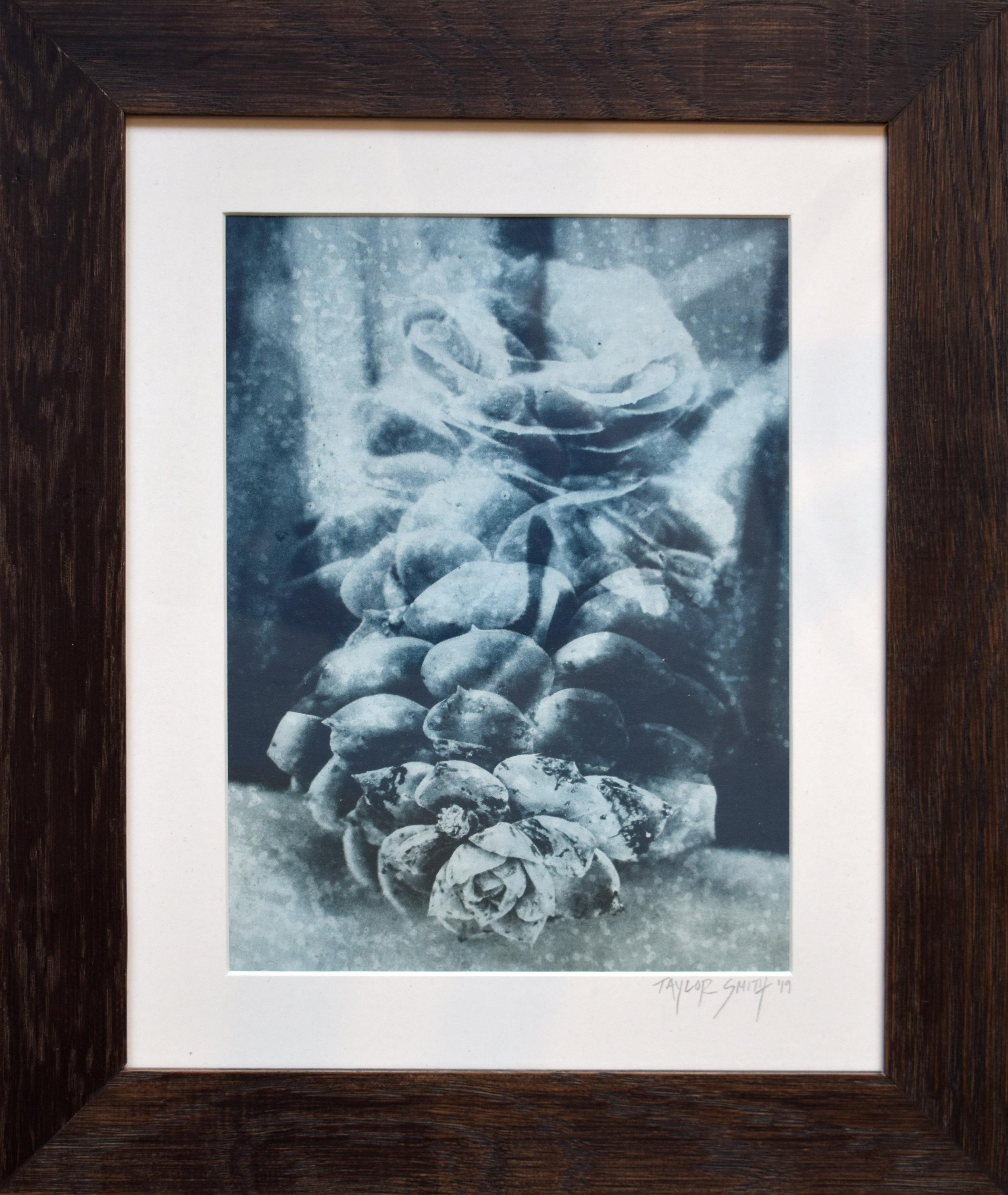 Photogravure, succulent bloom and calcite. 31cm x 37cm (framed). 2019